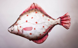 Dekoračný podhlavník - Platichthys 40cm