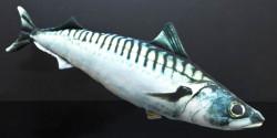 Dekoračný podhlavník - MAKRELA 50cm