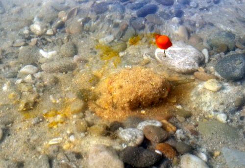 diffusion effect vo vode