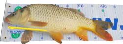 SET rybársky meter (100*25) + uvoľňovač háčikov
